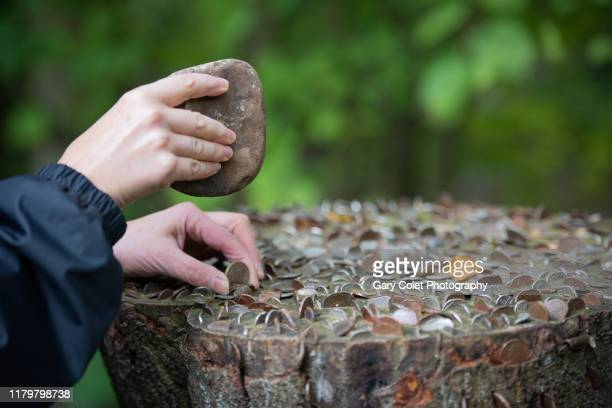 tree stump embedded with coins - gary colet stock pictures, royalty-free photos & images