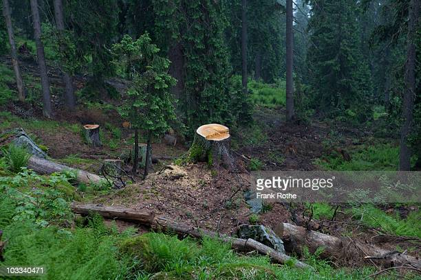 tree stump in beautiful looking forest