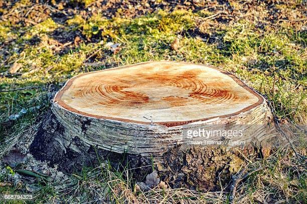 Tree Stump On Field During Sunny Day