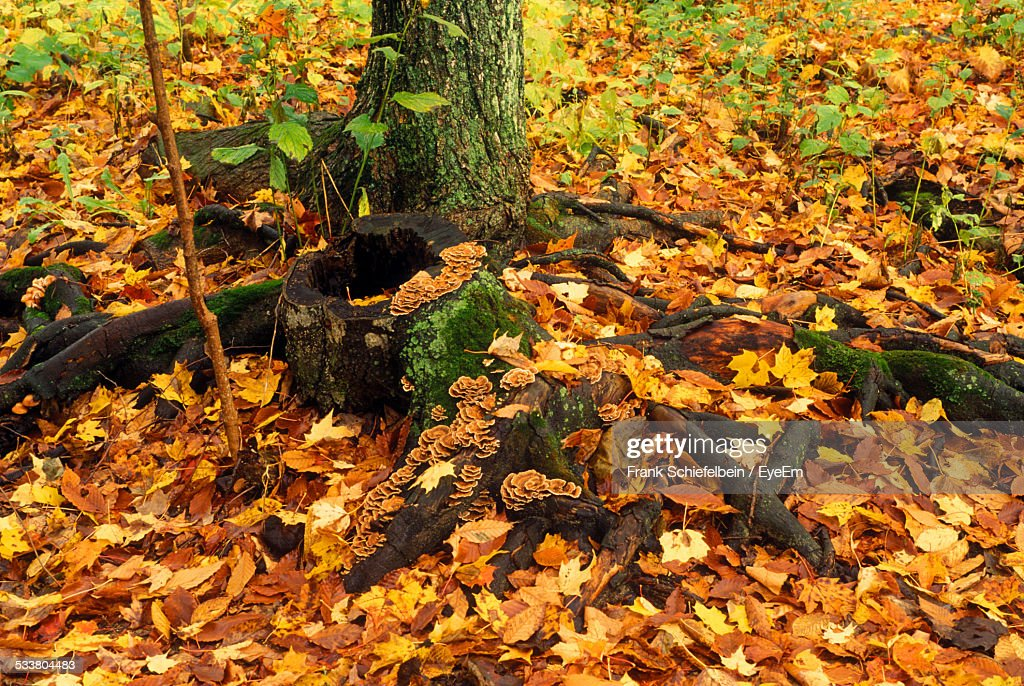 Tree Stump With Roots Covered In Moss, Fungi, And Fallen Leaves : Foto stock