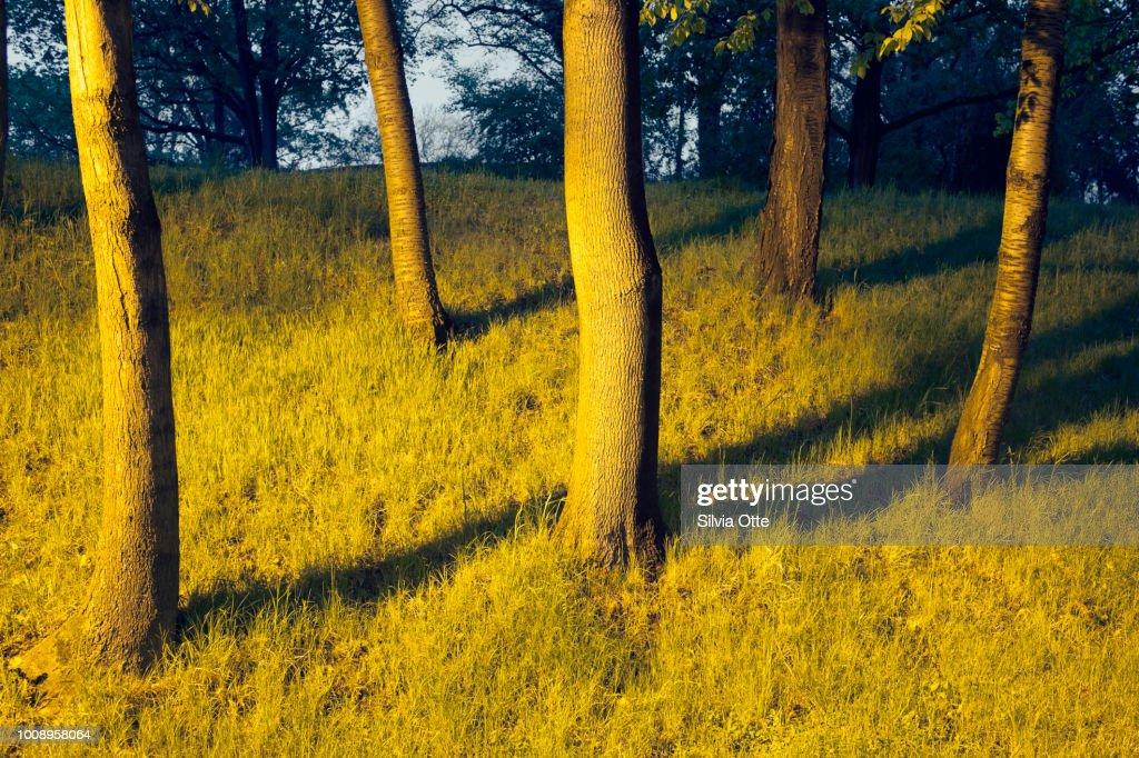 Tree Stumps at night : Stock-Foto