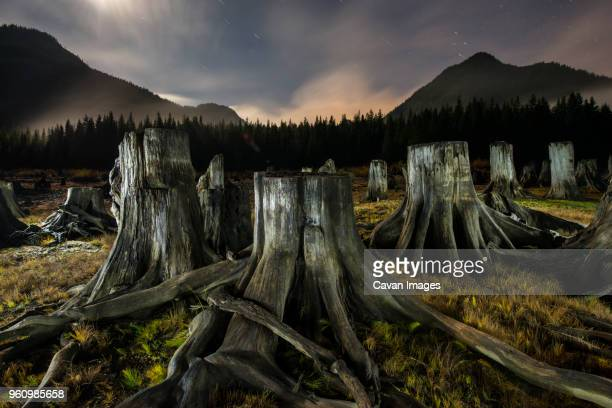 tree stumps in forest against mountains - tree stump stock pictures, royalty-free photos & images