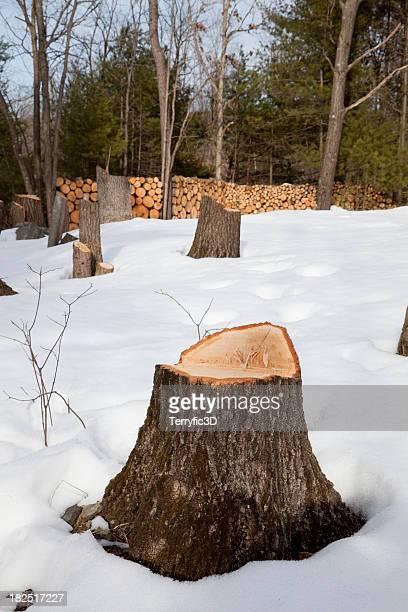 baum stumps im schnee, schichtabsatz log bäcker im hintergrund - terryfic3d stock-fotos und bilder