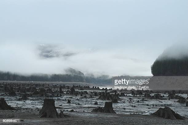 tree stumps on field during foggy weather - deforestation stock pictures, royalty-free photos & images