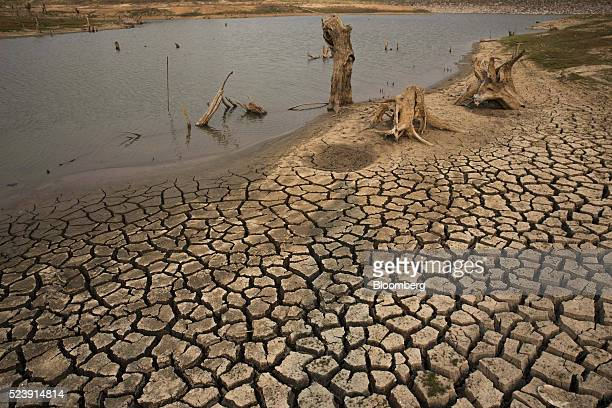 Tree stumps usually underwater stand in and around cracked earth and a pool of water at the dried up Mae Jok Luang reservoir in Chiang Mai Thailand...