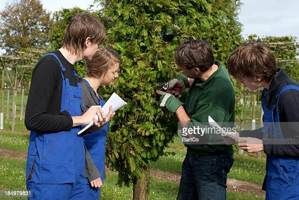 Tree surgeon and trainee