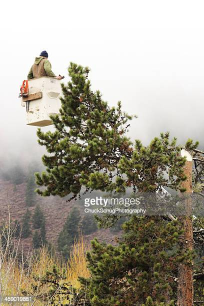 Tree Surgeon Forester Arborist Cutting Treetop