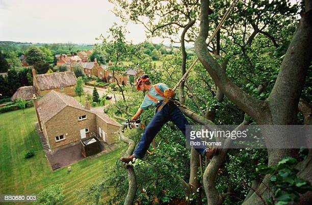 Tree surgeon suspended from branches above house