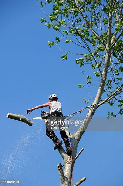 Tree Surgeon, U.K.
