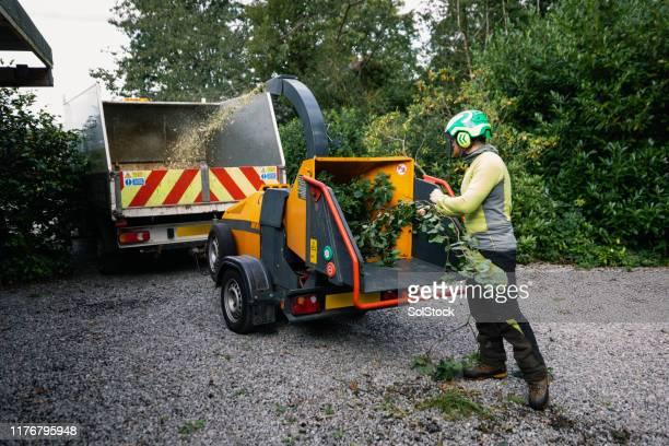 保護ヘルメットを着用した木の外科医は、細断機に小枝や葉を押し込む - 造園師 ストックフォトと画像