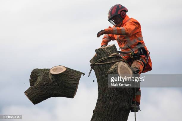A tree surgeon working with the National Eviction Team on behalf of HS2 Ltd fells a 200yearold oak tree alongside the East West Rail route known...