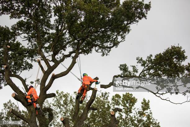 Tree surgeons working with the National Eviction Team on behalf of HS2 Ltd fell a 200-year-old oak tree alongside the East West Rail route known...