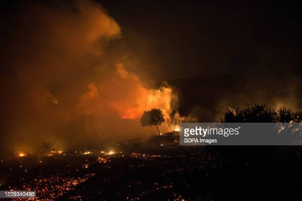 Tree surrounded by brush fire near the entrance to the 241 Toll Road on Portola Parkway. At about 6:47am on Monday, October 26, The Silverado Fire...