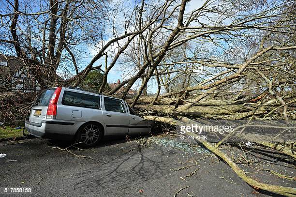 TOPSHOT A tree that fell in high winds brought by Storm Katie lies across a car in a street in Brighton on March 28 2016 KIRK