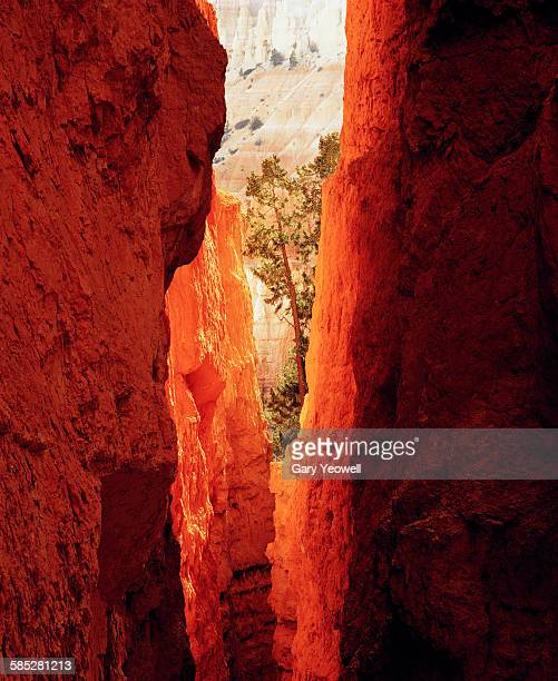 tree through hoodoo rock formations - yeowell stock photos and pictures