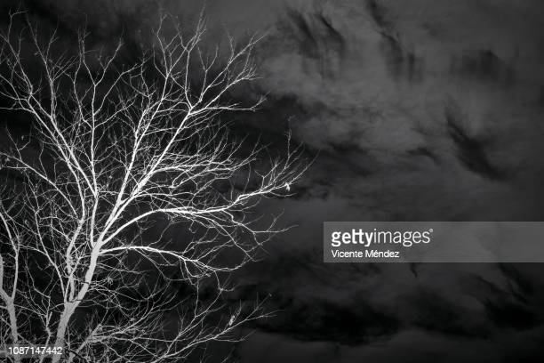 tree top - black and white instant print stock pictures, royalty-free photos & images