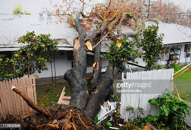 A tree toppled over crushing the roof of a multiunit dwelling on Friday January 4 in Sacramento California
