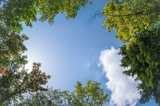 Tree tops from below against sky, Germany - gettyimageskorea