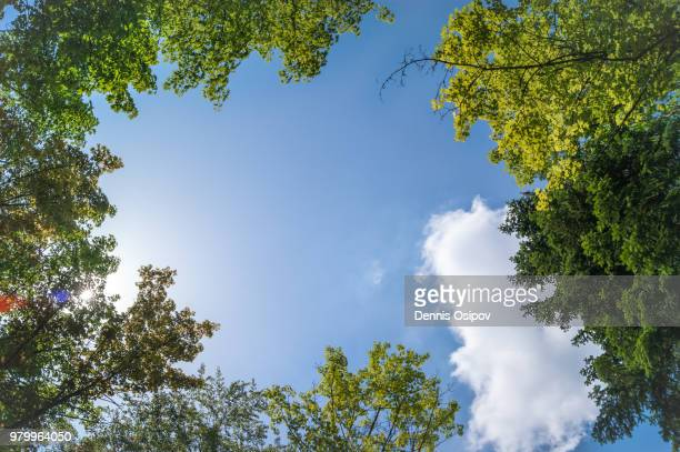 tree tops from below against sky, germany - low angle view stock pictures, royalty-free photos & images