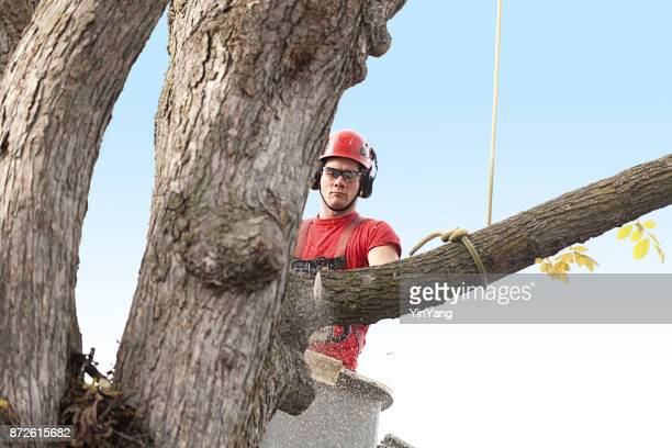 tree trimming arborist working in elevated bucket pruning tree with chainsaw - absence stock pictures, royalty-free photos & images