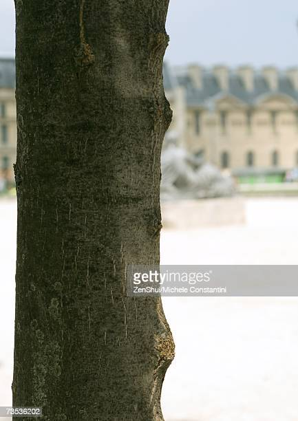 Tree trunk, building and statue in background