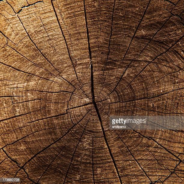 Tree trunk center