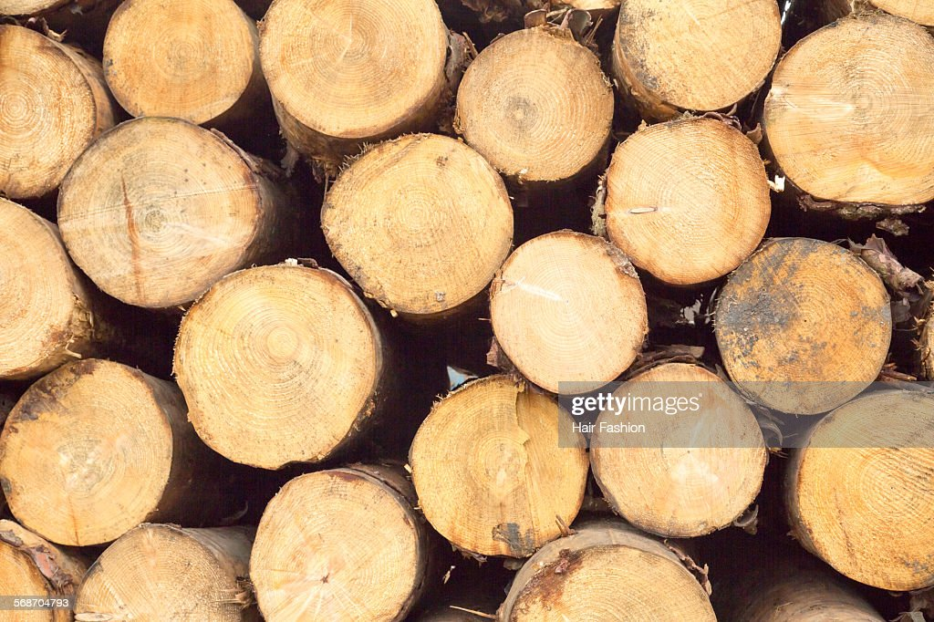 Tree trunk circles : Stock Photo