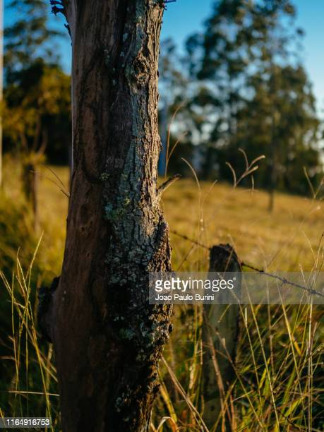 tree trunk detail on a rustic fence - rústico stock pictures, royalty-free photos & images