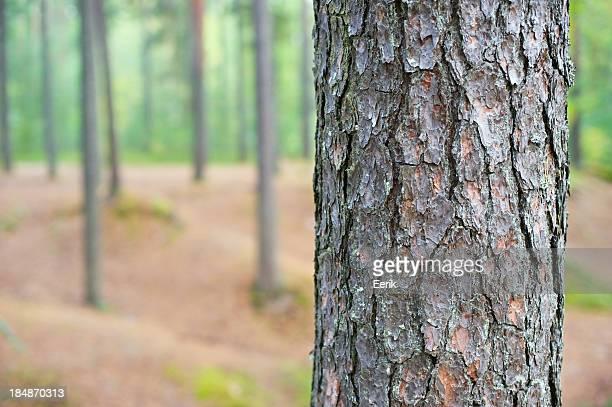 Tree trunk detail