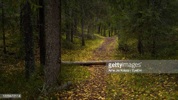 tree trunk fallen over footpath through a forest covered by golden autumn leaves - arne jw kolstø stock pictures, royalty-free photos & images