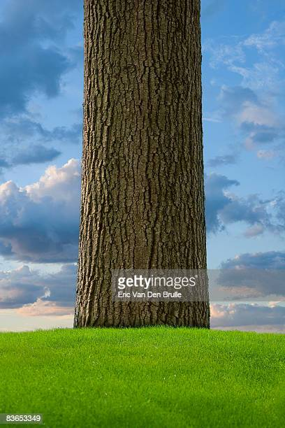 tree trunk, green grass and sky - eric van den brulle stock pictures, royalty-free photos & images