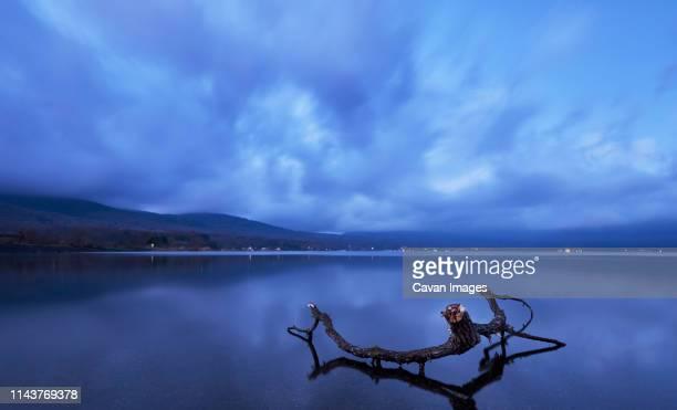 tree trunk in the water at sunrise, lake yamanaka, yamanashi - ええじゃないか 発祥の地 ストックフォトと画像