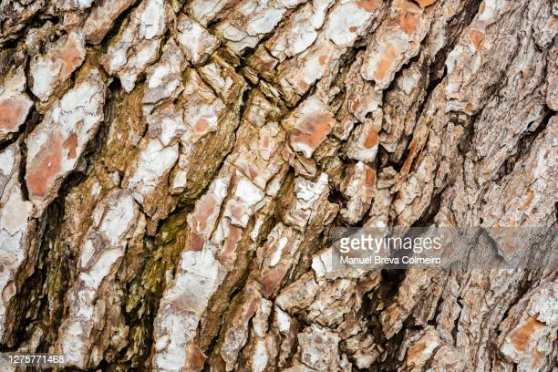 tree trunk - benicassim stock pictures, royalty-free photos & images