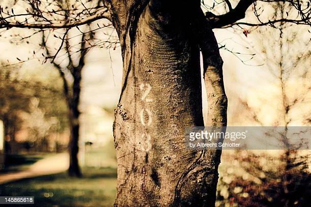 tree trunk - albrecht schlotter stock-fotos und bilder