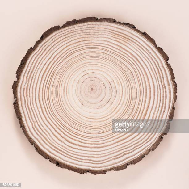 tree trunk slice, annual rings - larch tree stock pictures, royalty-free photos & images