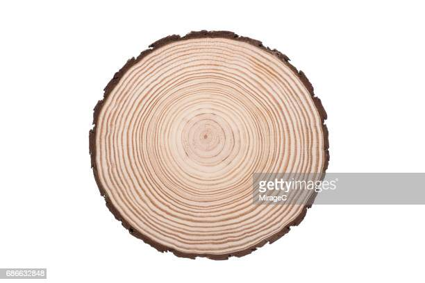 tree trunk slice, annual rings - log stock pictures, royalty-free photos & images