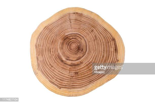tree trunk slice on white - log stock pictures, royalty-free photos & images