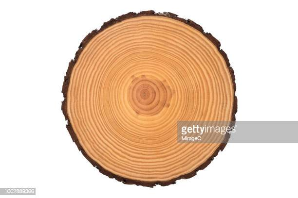 tree trunk slice - cross section stock pictures, royalty-free photos & images