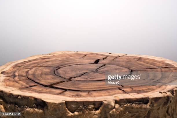 tree trunk slice surface - grooved stock pictures, royalty-free photos & images