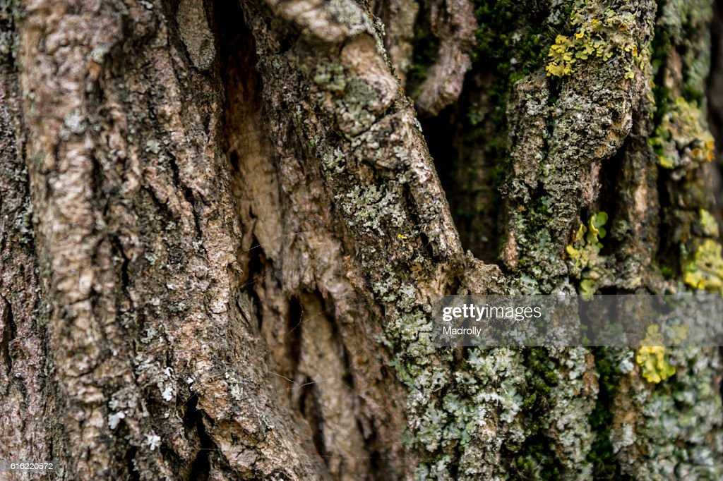 Tree trunk texture : Stock Photo