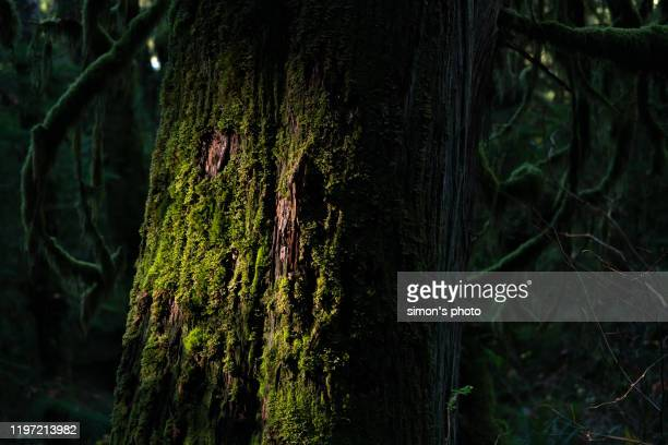 tree trunk with many attachment - british columbia stock pictures, royalty-free photos & images