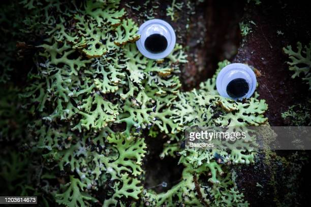 tree trunk with moss and googly eyes - brown cartoon characters stock pictures, royalty-free photos & images