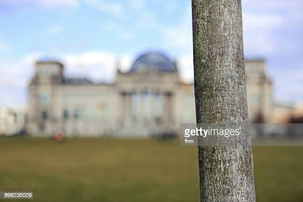 tree trunk with reichstag building (german parliament building) - berlin, germany - tree trunk stock pictures, royalty-free photos & images