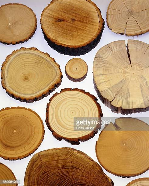 Tree trunks, cross section showing annual growth rings