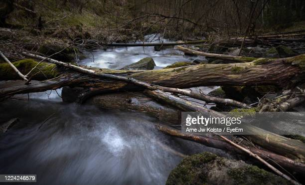 tree trunks lying across a river in a wild forest - arne jw kolstø stock pictures, royalty-free photos & images