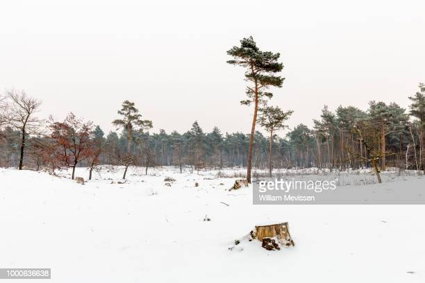 tree trunks - william mevissen stockfoto's en -beelden