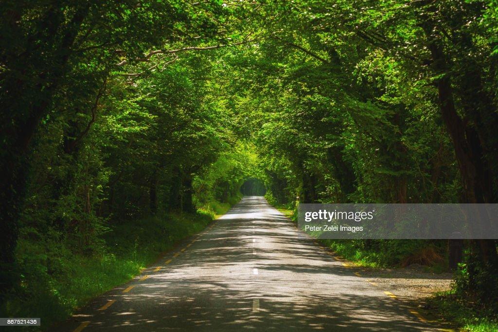 Tree tunnel in the autumn in Ireland : Stock Photo