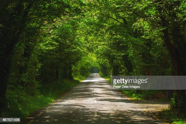 tree tunnel in the autumn in ireland - two lane highway stock pictures, royalty-free photos & images