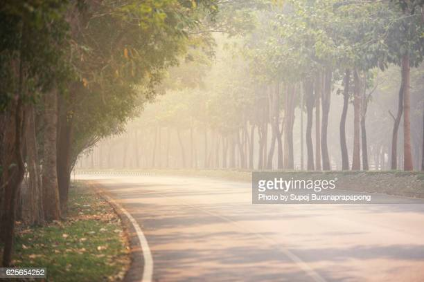 Tree tunnel in the morning fog and sunrise