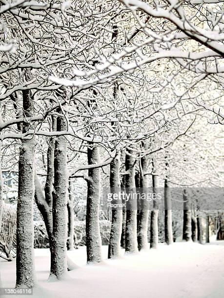 Tree tunnel in winter